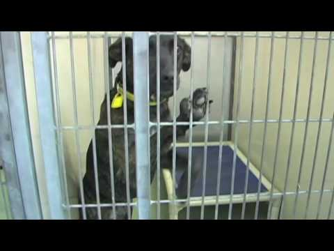 Adopt a Pet Today - Cleveland APL