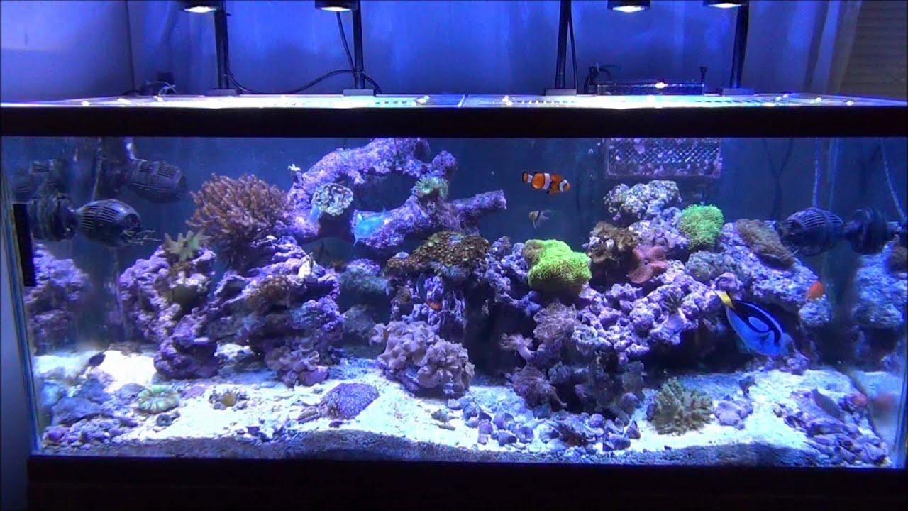 my reef tank under 4 kessil led pendants youtube