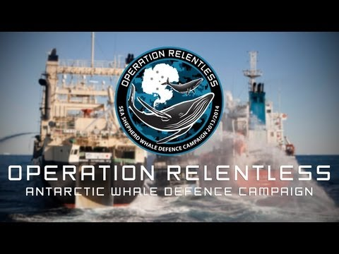 Operation Relentless - Sea Shepherd's 10th Antarctic Whale D