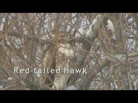 Klamath Basin Birds