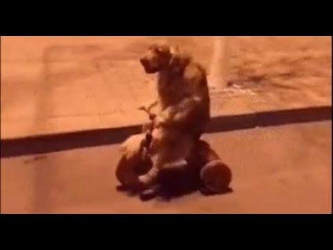 Videos Para Whatsapp Chistosos Cortos | Animales Graciosos | Videos de Risa #25