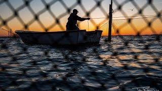 Chesapeake Bay Pound Netting