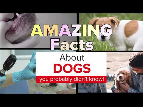 5 Amazing facts about dogs you probably didn't know!