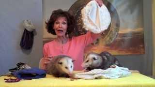 Proper Opossum Pouches