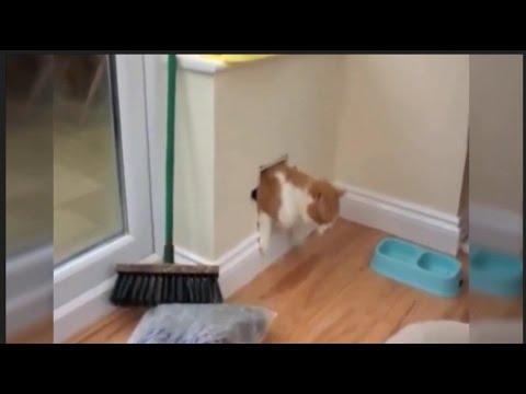 Best Funny Cat Videos That Make You Laugh - 2017 Cat Fails Compilation