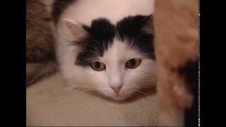 Бродячие кошки и собаки