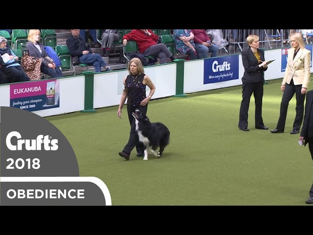 Obedience - Dog Championship - Part 13 | Crufts 2018