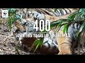 Eyes on the forest: the reality of the palm oil industry | WWF-Singapore