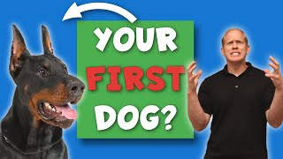 Doberman 101: Why First Time Owners FAIL