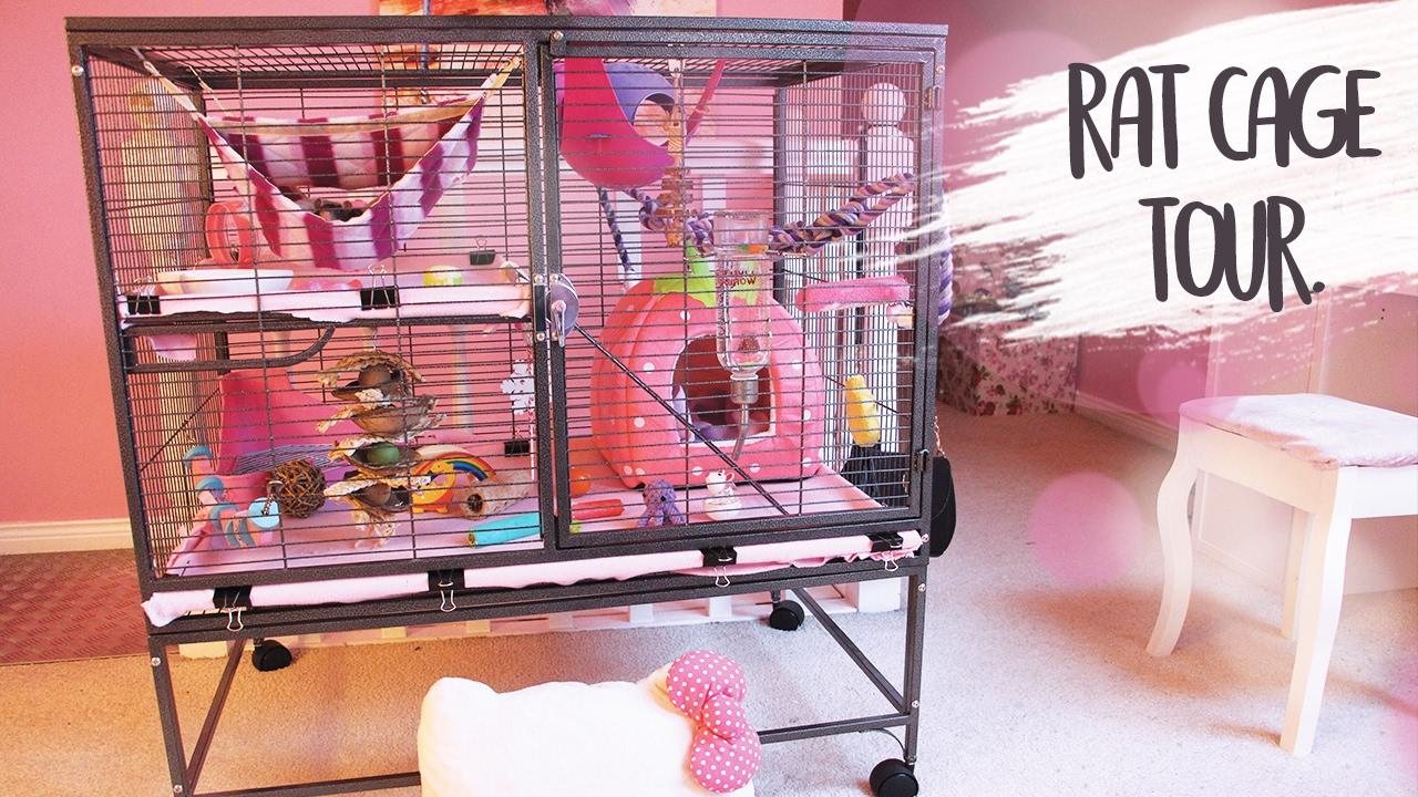 Rattie Cage Tour Youtube