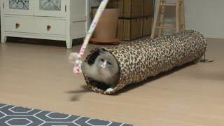 [까까캔디] 똥꼬발랄한 고양이|  고양이장난감
