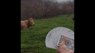 How Do Animals React To MAGIC TRICKS?