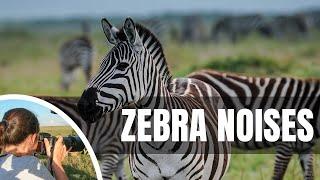 Zebra Noises