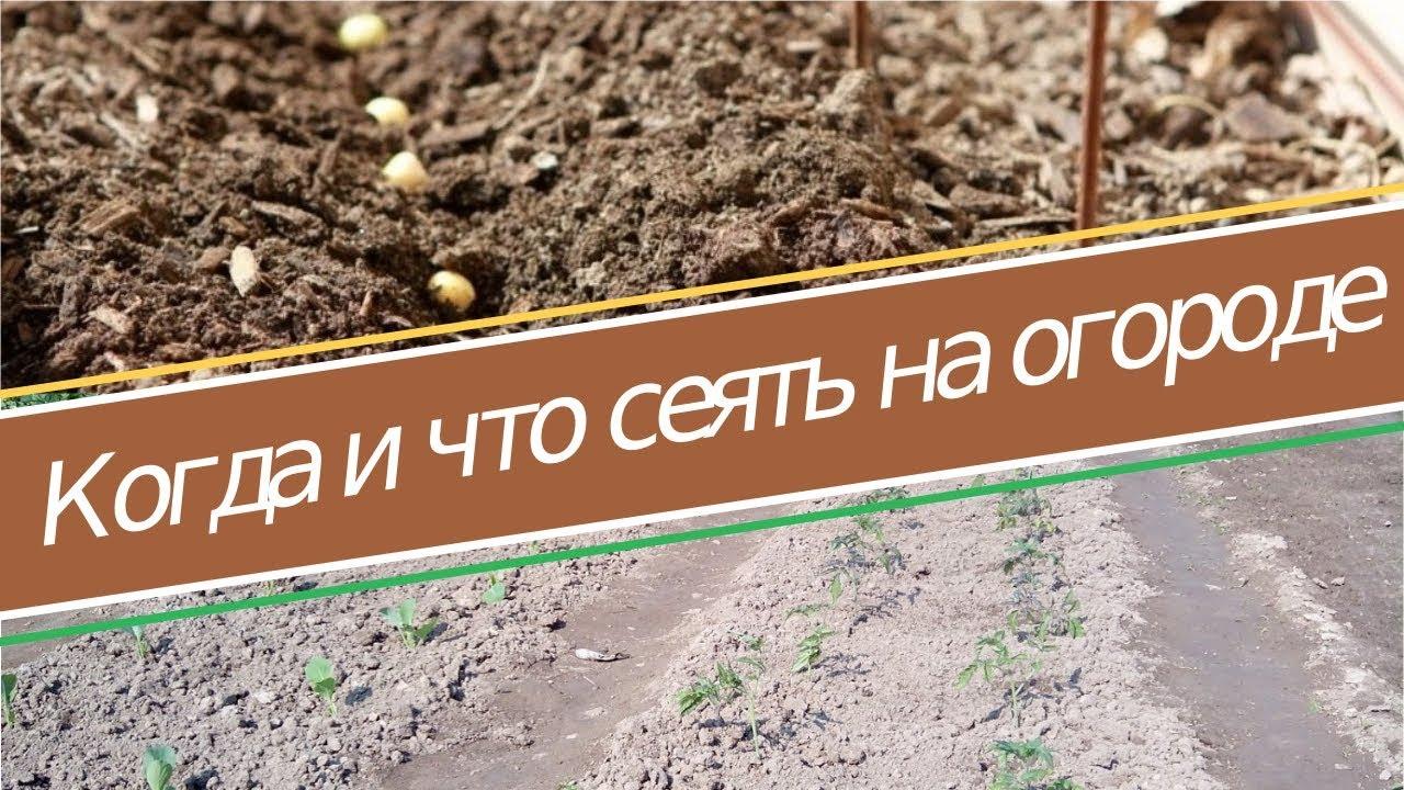всякое семя знает свое время