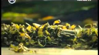 Познавательный фильм -  Водоросли для здоровья пища богов