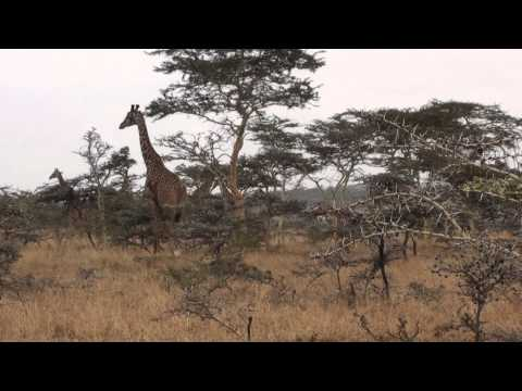 Imagine Africa by Chris Oram - Clip 1