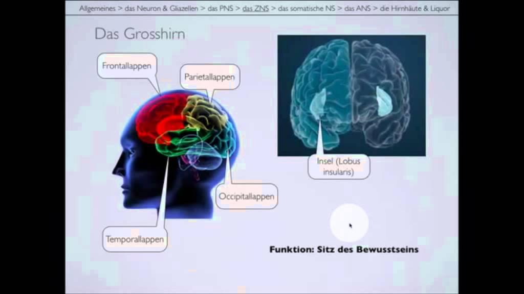 Langsame Version des Nervensystems Teil 2/2 - YouTube