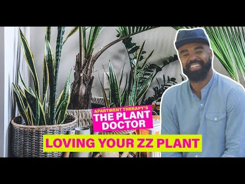 Loving Your ZZ Plant | The Plant Doctor | Apartment Therapy