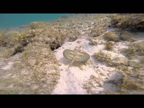 Een onderwateravontuur op Curaçao