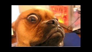 Funny Dogs | Top 10 funny dogs | Best Compilation of funny Dogs
