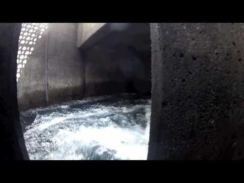 swimming the fish ladder.. Illinois river oregon