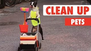 Clean Up Pets