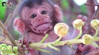 Animals Monkey, Beautiful flowers with baby monkey | watch baby monkey on the flowers tree