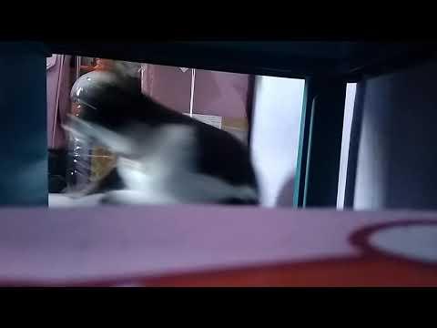 #DiRumahAja Nonton MNCTV from YouTube · Duration:  46 seconds