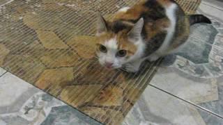 Кошка Кузя утром хочет есть 06-:)