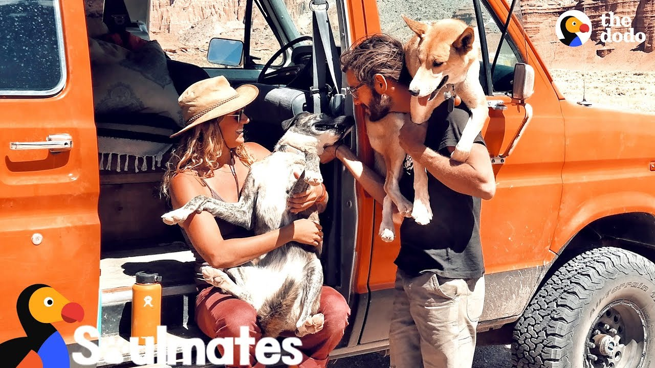 Couple And Their Shelter Dogs Become The Happiest Family | The Dodo