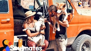 Couple And Their Shelter Dogs Become The Happiest Family | The Dodo Soulmates