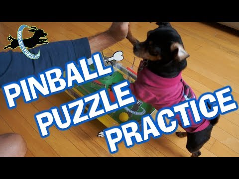 Puppy Pinball Puzzle Practice | Ripley Plays With Her Dog Learning Game