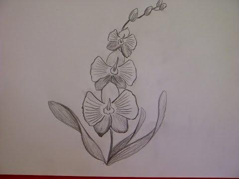 zeichnen lernen blume zeichnen tulpe zeichnen lernen. Black Bedroom Furniture Sets. Home Design Ideas