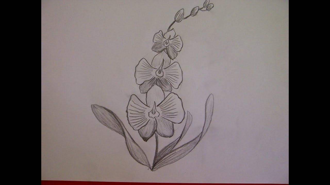 Blume Zeichnen Orchideen Malen Zeichnen Lernen Fur Anfanger Youtube