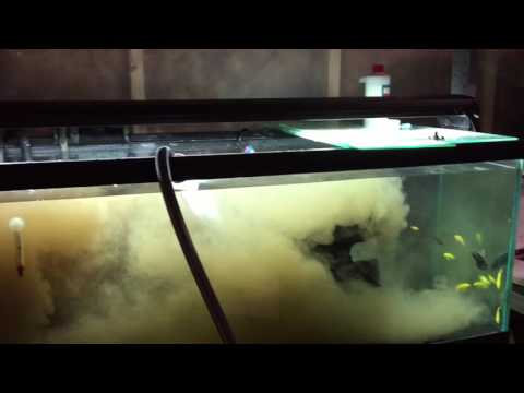 The Best Way To Cycle Your New Aquarium