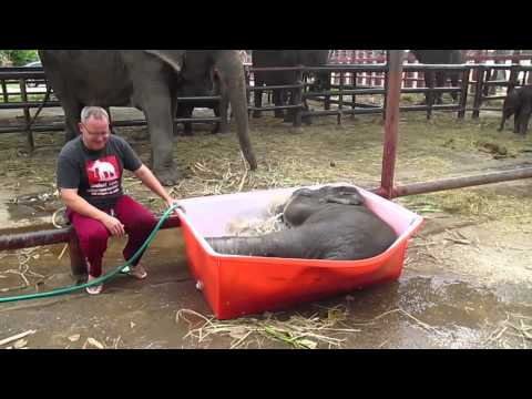 "Baby Elephant Bathing ""Double trouble"""
