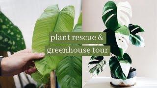 variegated monsteras + greenhouse tour // @harrison_plants