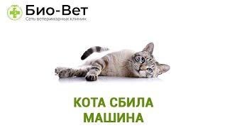 Кота сбила машина. Ветеринарная клиника Био-Вет.