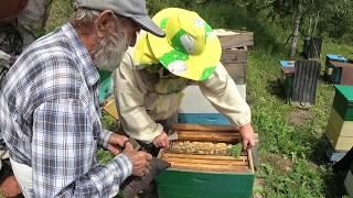 Пасека - Качаем мёд