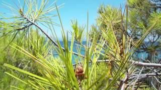 Kokkino Limanaki in Rafina | Κόκκινο Λιμανάκι Ραφήνας