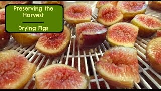 Thrifty Living - Preserving The Harvest - Drying Figs