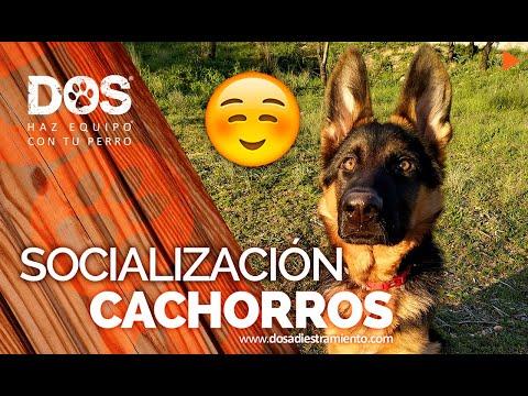 Socialización de Cachorros 🐺🐶 | Consejos para educar perros 📝