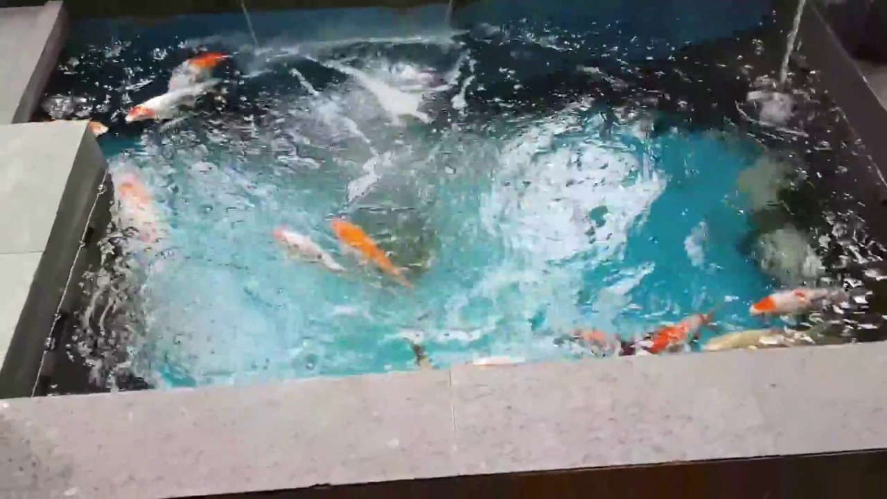 Desain Kolam Koi Minimalis Youtube Kolam Kolam Ikan Desain