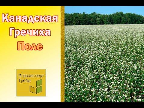 Сорт Девятка Семена посевной гречки от АГРОЭКСПЕРТ ТРЕЙД Видео .