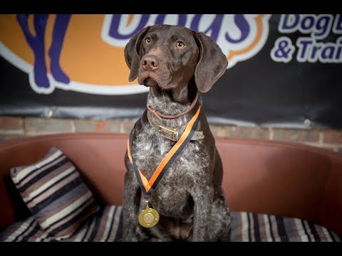 Maia – German Shorthaired Pointer – 4 Weeks Residential Dog Training