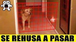 Mascotas Que Detectaron Cosas Misteriosas Que Sus Dueños No Imaginaban