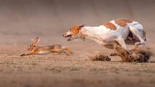 Охота с собакой.  Ликбез