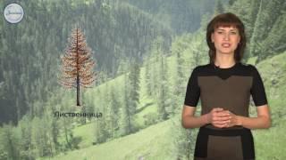 Биология 6 Лесные сообщества