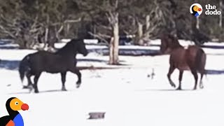 Wild Horses Reunite After Six Months Apart | The Dodo