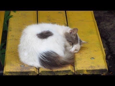 White cat sleep on a bench